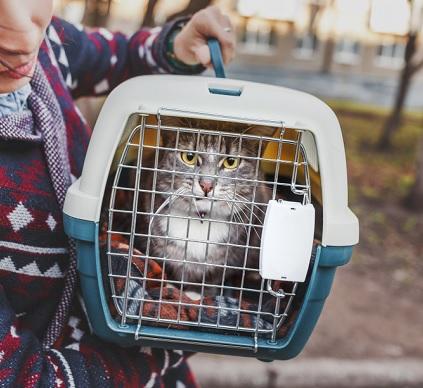 Kat vervoeren in auto